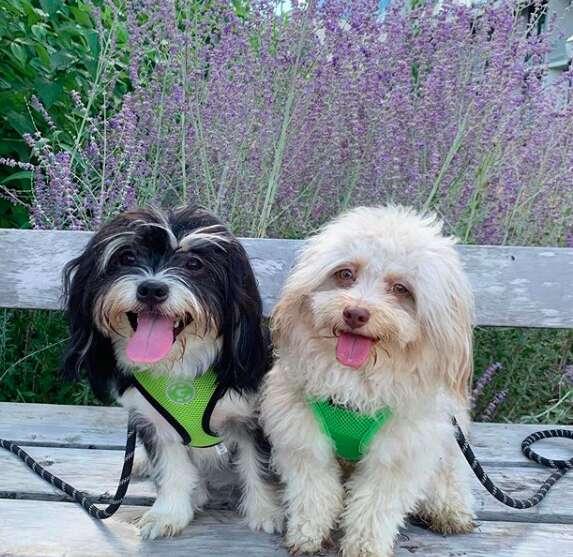 Dogs staring at camera