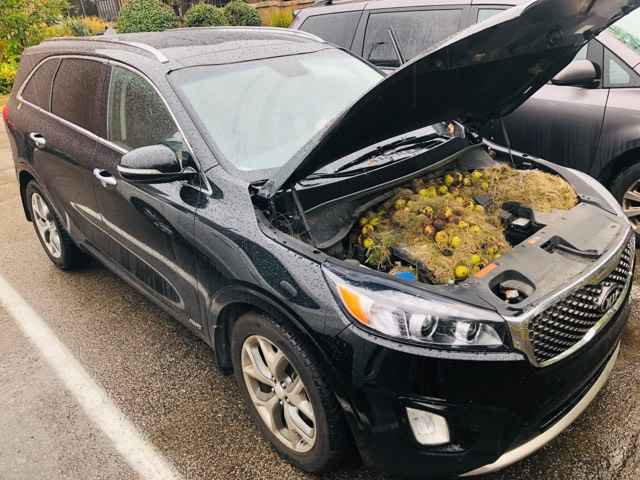Family Didn't Know Why Car Was Running Strangely — Then They Popped The Hood