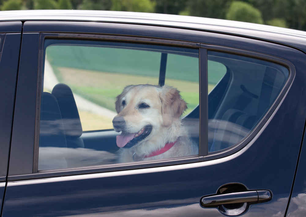 Uber Will Let You Bring Your Pet Along for the Ride, if You Pay Up