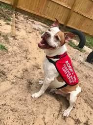 Dog wearing adoption vest