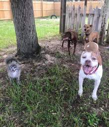 Dogs hanging out in yard