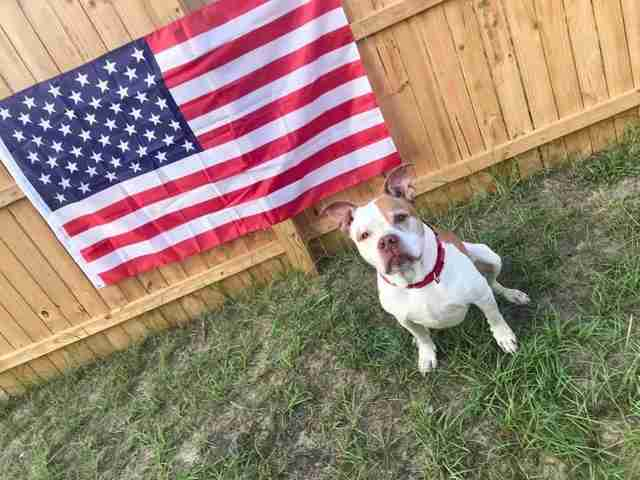 Dog sitting in front of American flag