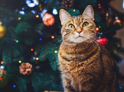 cat in christmas tree advent calendar
