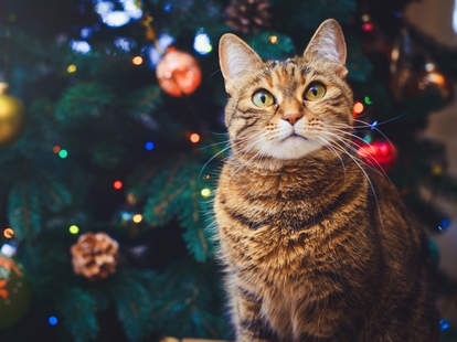 cat in christmas tree advent calendar
