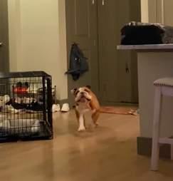 Dog sees toilet paper fan