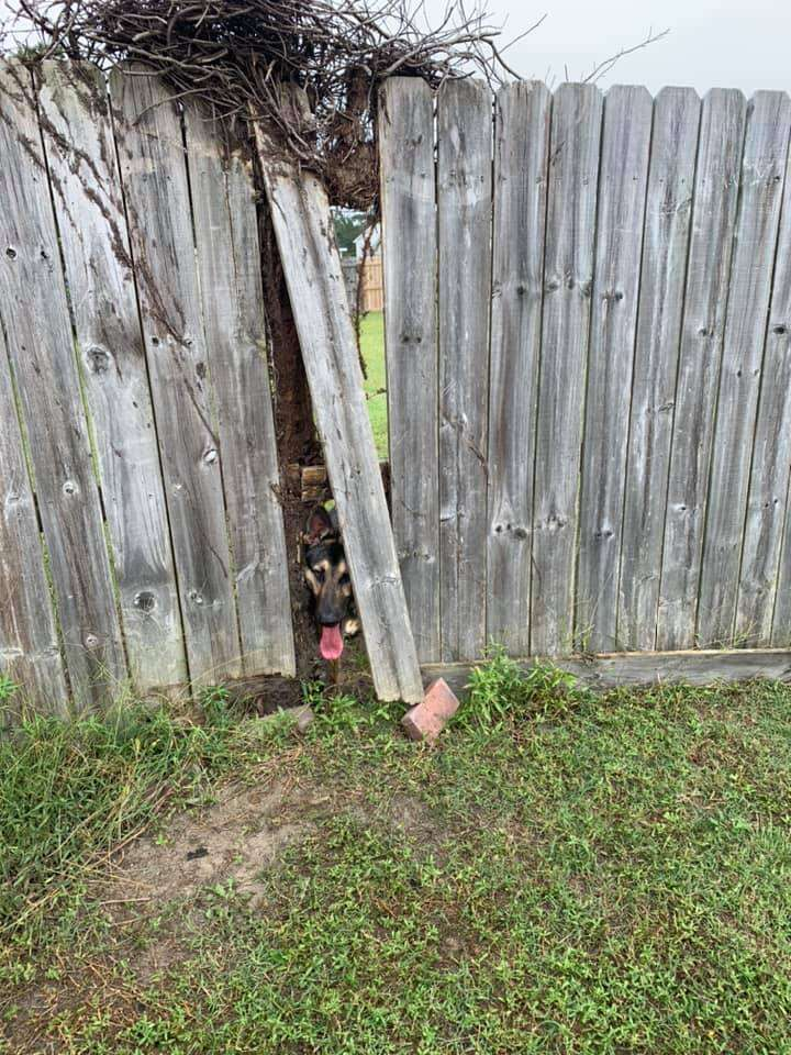 dog breaks through fence