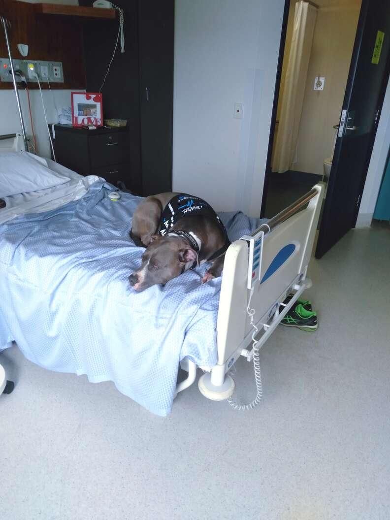 pit bull saves mom's life