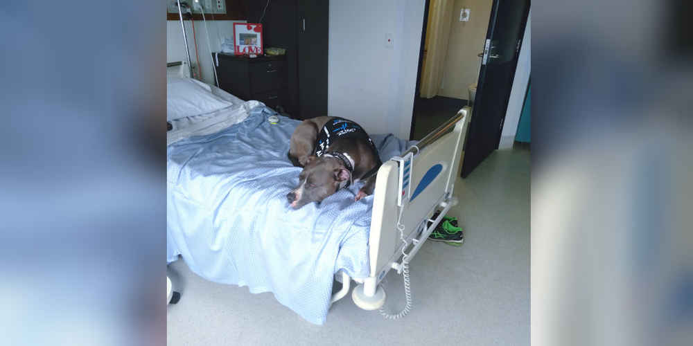 Dog Refuses To Leave Mom's Hospital Room After Saving Her Life