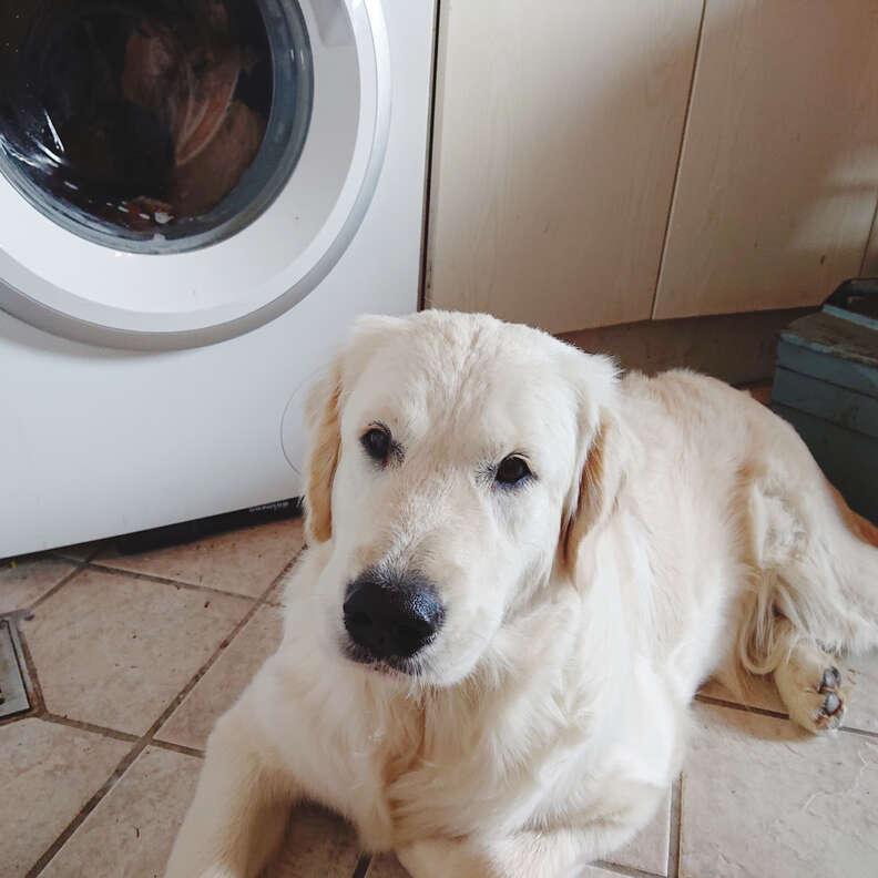 dog hates washing machine