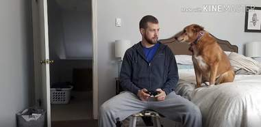 Dog tries to distract dad from video games