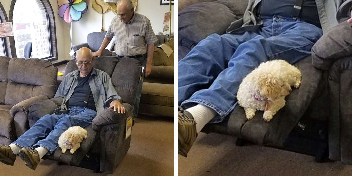 Grandpa Brings Dog To Furniture Store To Make Sure She Likes Chair Too