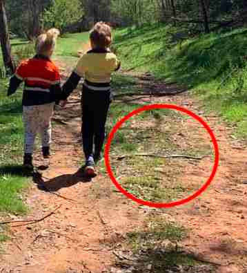 Woman accidentally takes photo of Eastern brown snake near kids