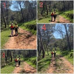 Kids walk across the path of an Eastern brown snake