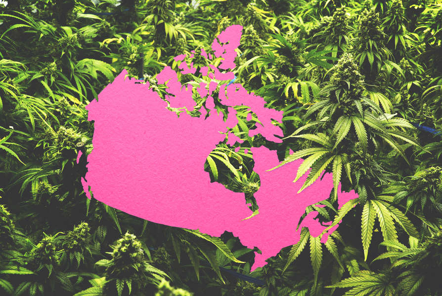 Where to buy Weed in Canada