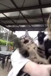 cat sees rain for the first time
