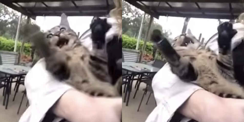 Cat Sees Rain For The First Time And Loses Her Mind