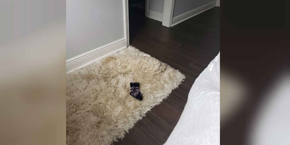 Dog Finds The Perfect Hiding Spot To Sleep In