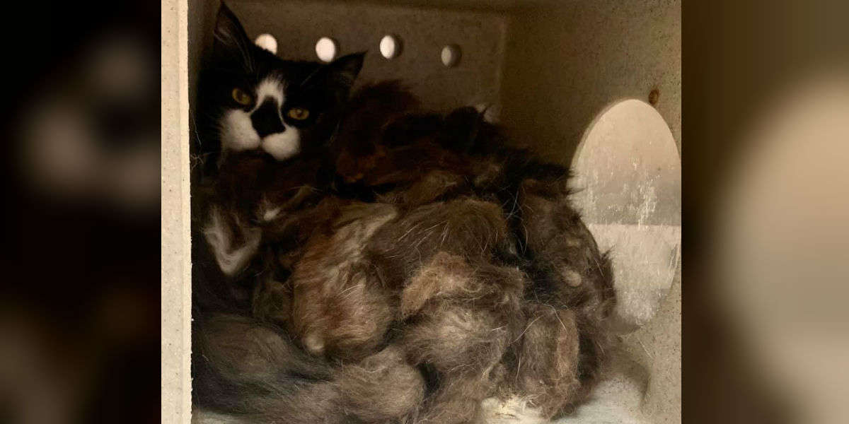 Family Moves Into House And Finds The Furriest Cat They've Ever Seen