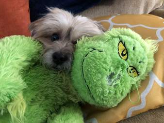 Simba the dog cuddles with his favorite toy