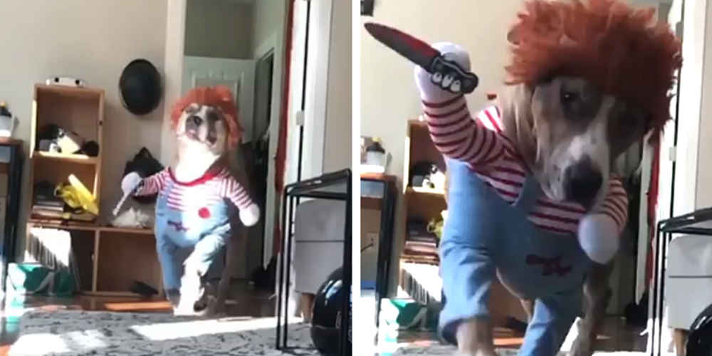 This Dog's Terrifyingly Cute 'Killer' Costume Just Won Halloween