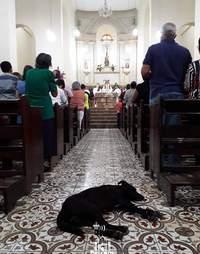 A dog seeks shelter in a church in Brazil