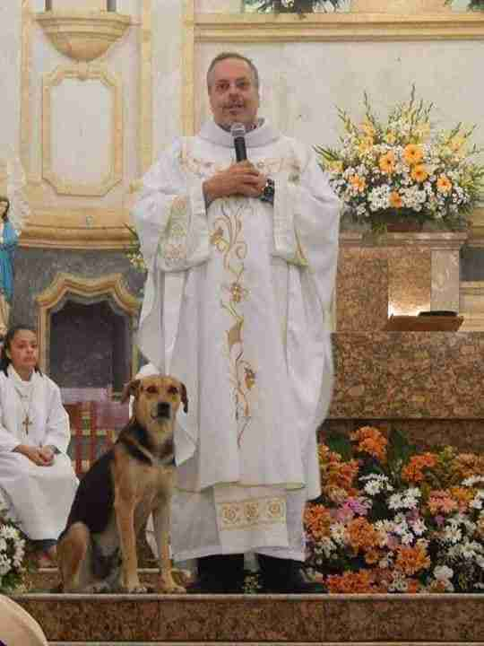 Dog on pulpit during mass