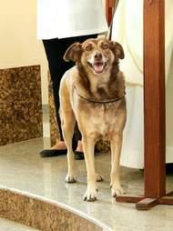 A stray dog for adoption at church