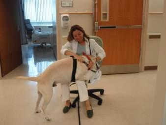 Benji the dog visits staff at the Monongahela Valley Hospital