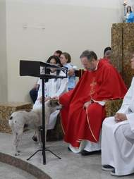 Priest pets a dog during mass