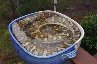 snake in bird bath