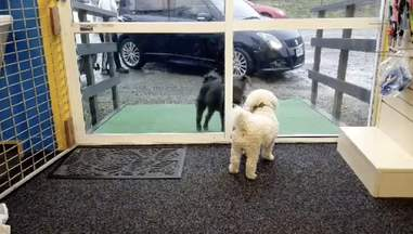 doggy daycare