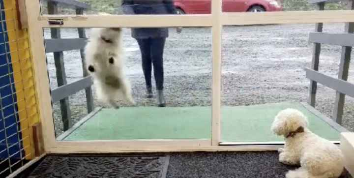 Hidden Camera Captures Dogs Arriving At Their Doggy Daycare