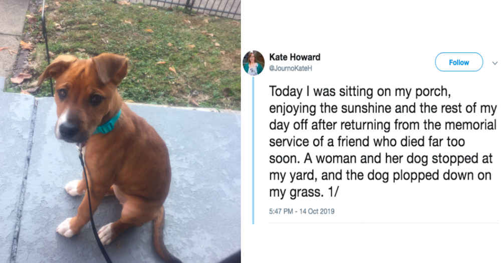 Strange Dog Shows Up On Woman's Lawn — And Seems To Recognize Her