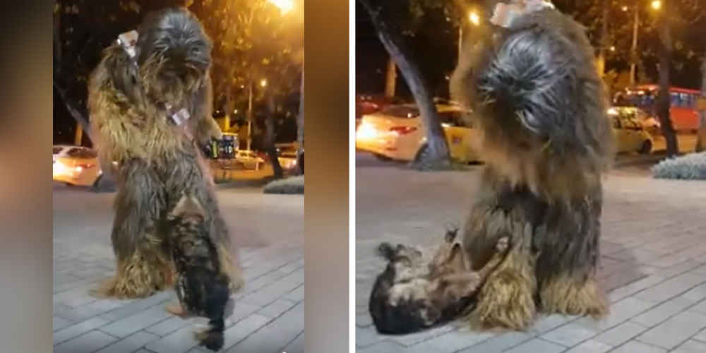 Dog Is So Excited To Bump Into Chewbacca On The Street