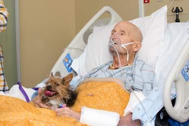 dog visits dad in hospital