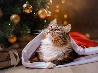 cat christmas lights holiday target