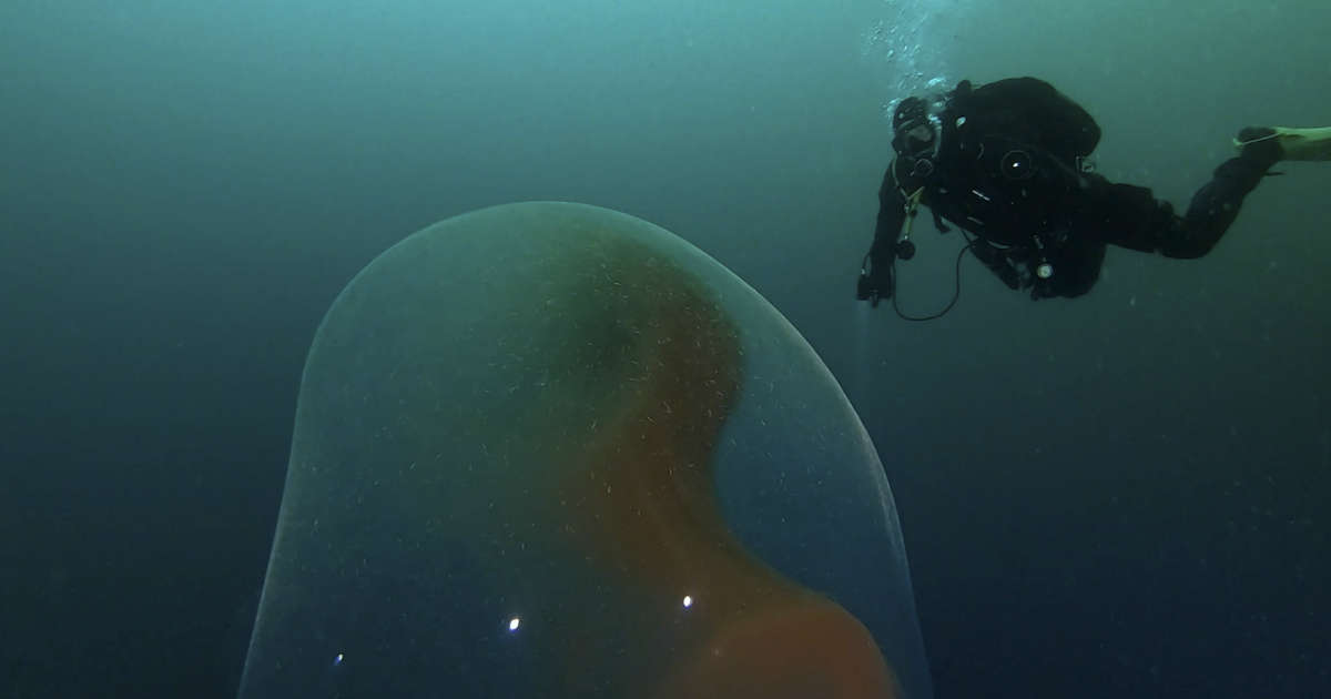 Divers Find Giant Mysterious 'Egg' Floating In Ocean