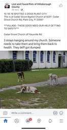 dog abandoned at church