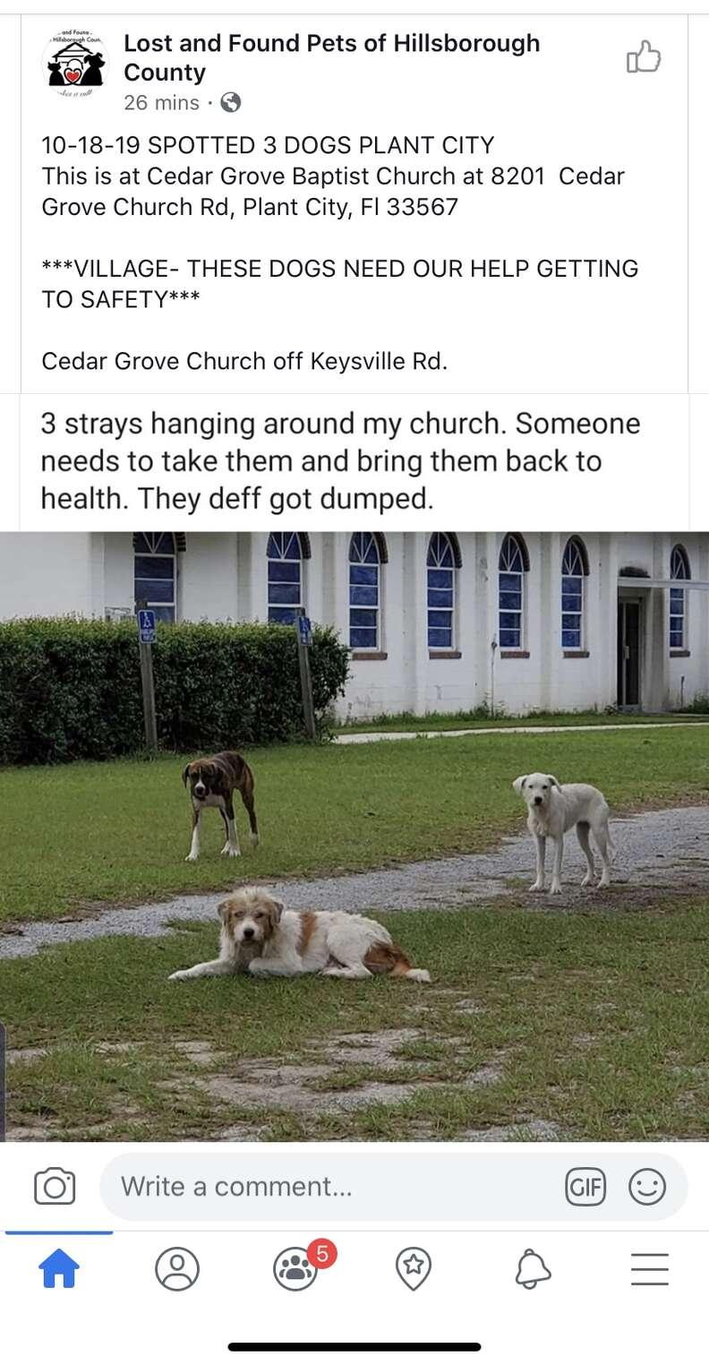 dog abandoned at church