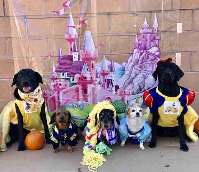 Dogs dressed up as different Disney princesses