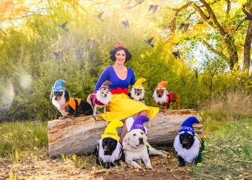 Woman and dogs dresses as Snow White and the Seven Dwarves