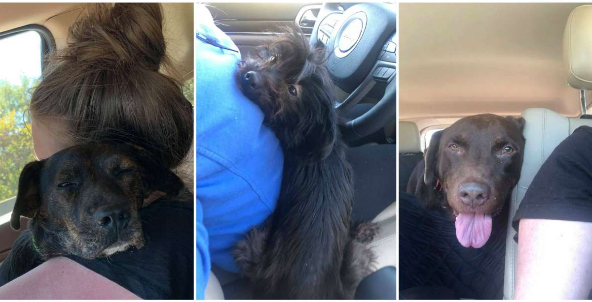 Woman Goes To Adopt One Dog From Shelter — And Comes Out With Three