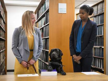 hatty dog chicago state's attorney's office emotional support animal