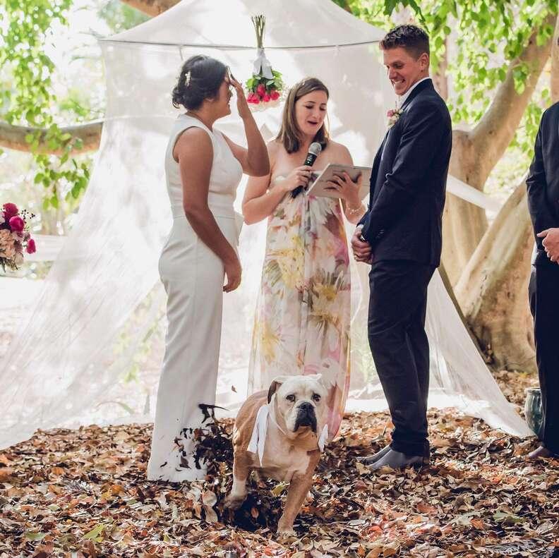 Bulldog best man pees on bride