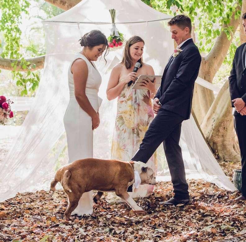Dog pees on bride during wedding