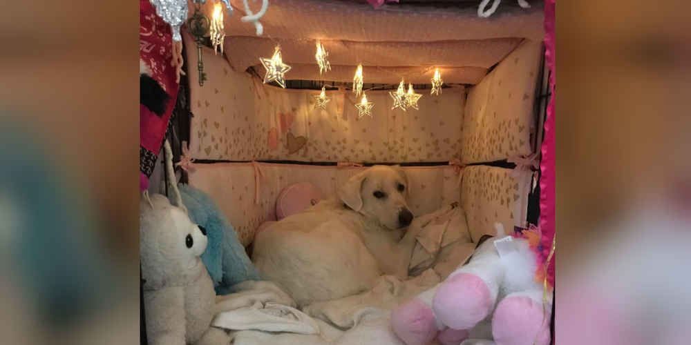 Woman Transforms Rescue Dog's Crate Into The Cutest Space Ever