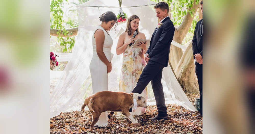 Dog 'Best Man' Isn't Quite Ready To Give His Mom Away