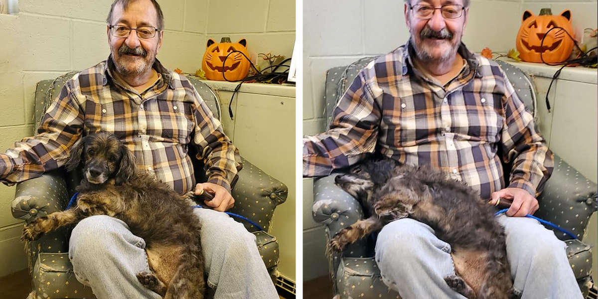 This Is The Moment A Senior Shelter Dog Knew He Was Safe