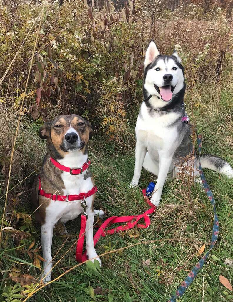 Lucy the dog and her husky sister