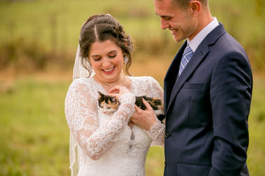wedding kitten